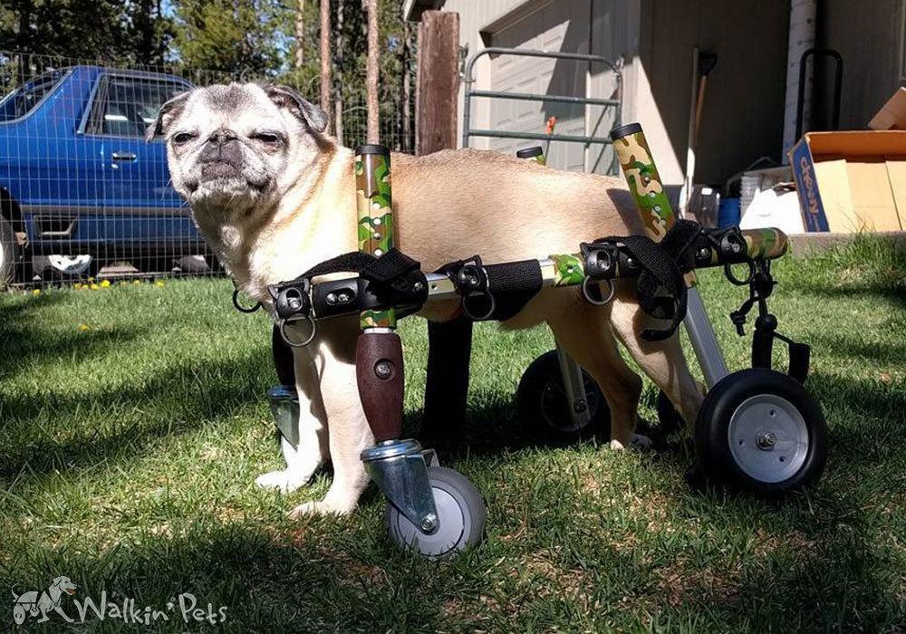Rollwagen 4-Rad Small - Walkin´Wheels Quad Wheelchair Small