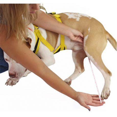 gelähmter hund therapie